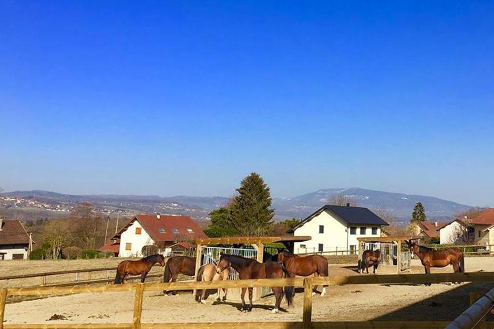 ecurie active chevaux