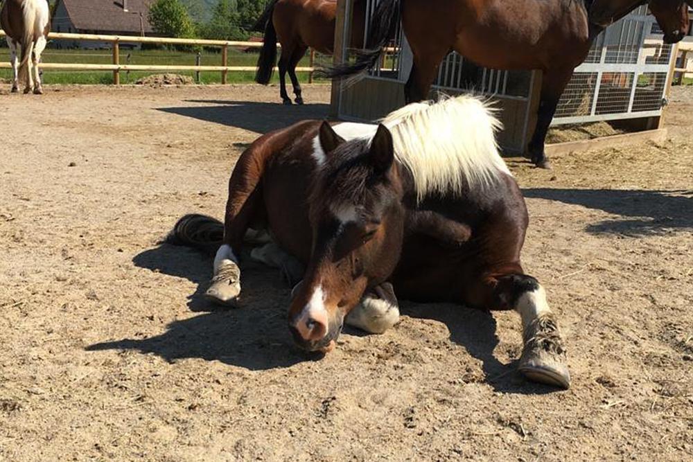 cheval endormi